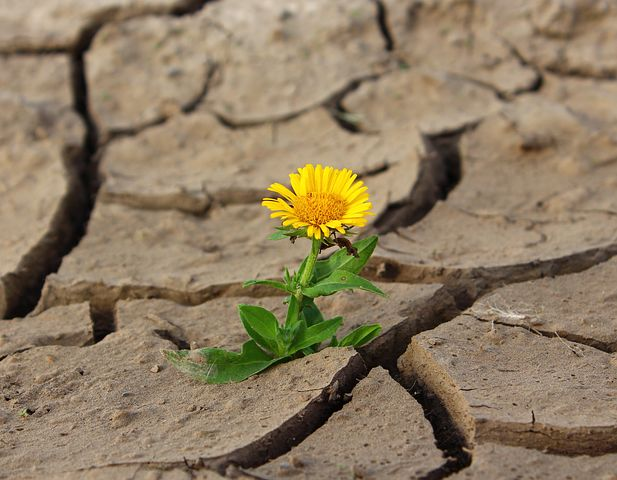 Flower growing in cracked dry ground representing positivity